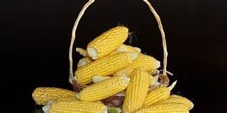 resep makanan dari jagung
