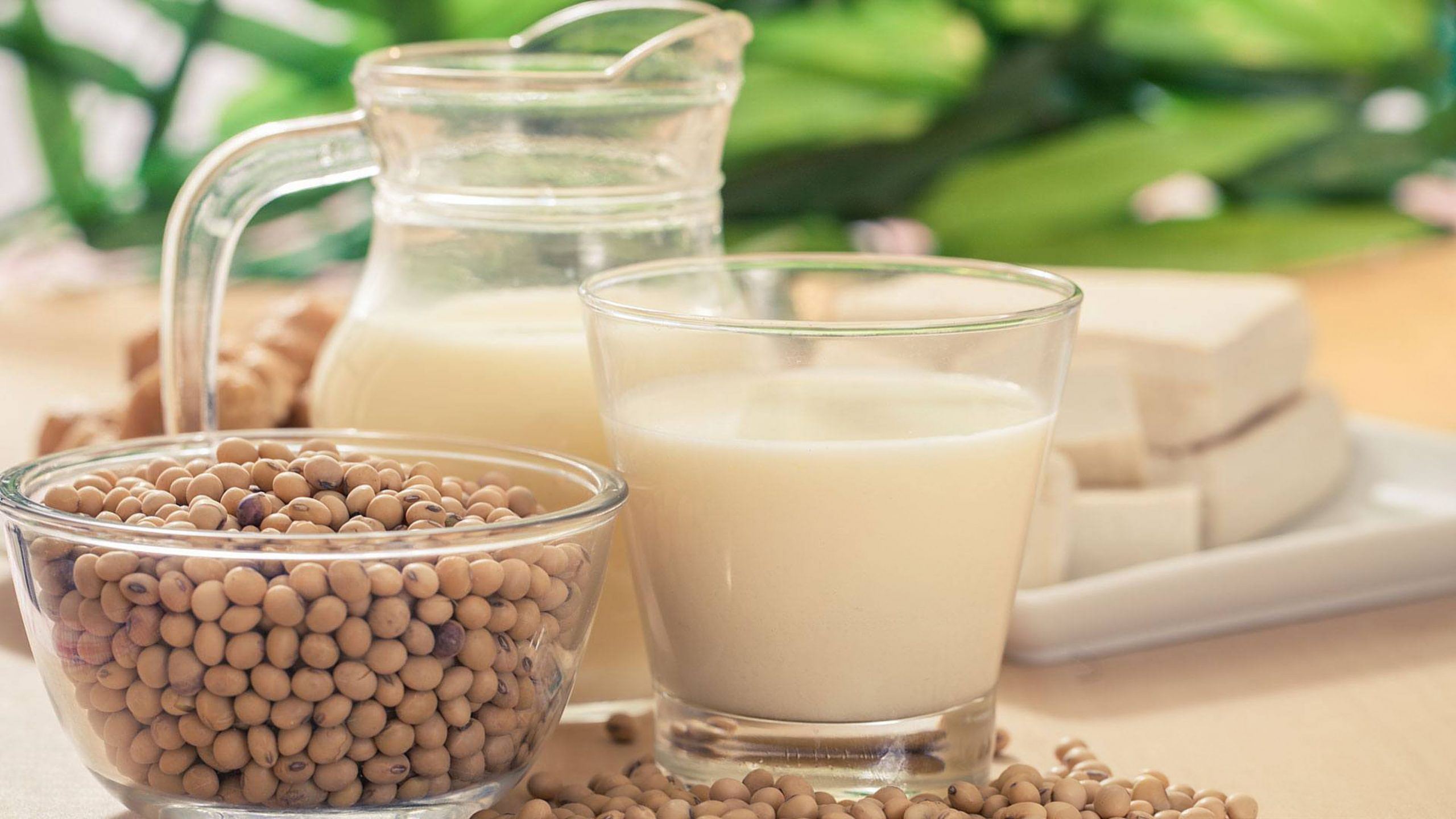 Langkah - Langkah Membuat Susu Kedelai